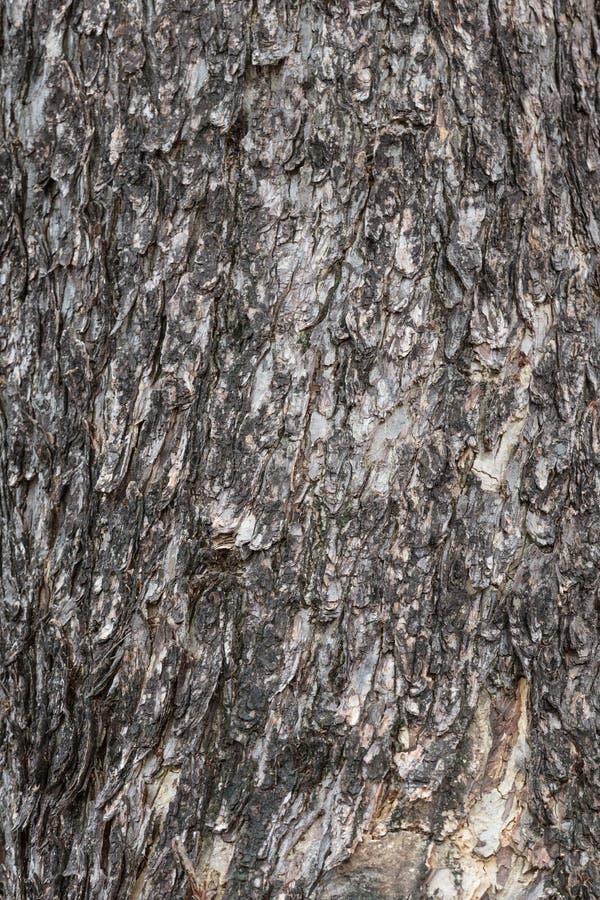 Textura de la piel de la corteza imagenes de archivo