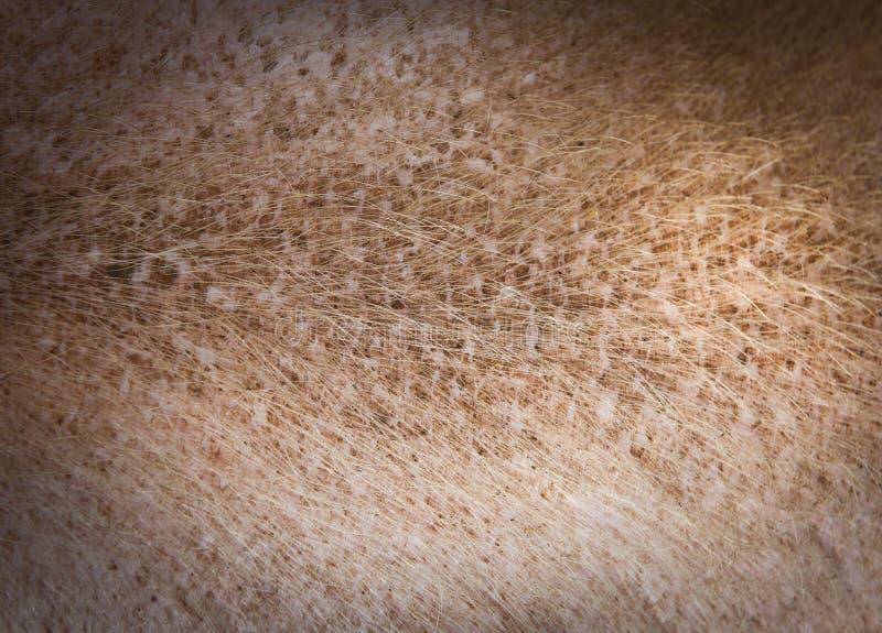 Textura de la piel de cerdo fotografía de archivo libre de regalías