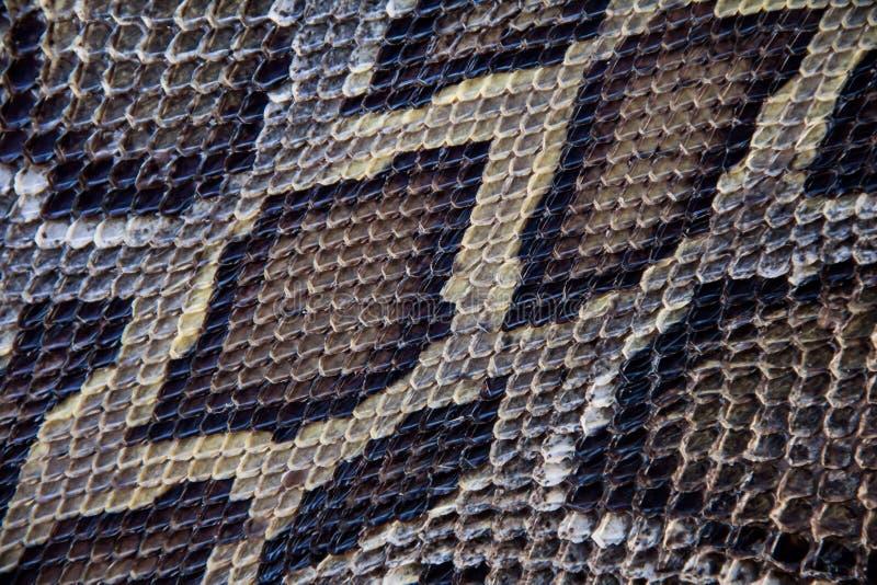 Textura de la piel de serpiente de la boa imagen de archivo