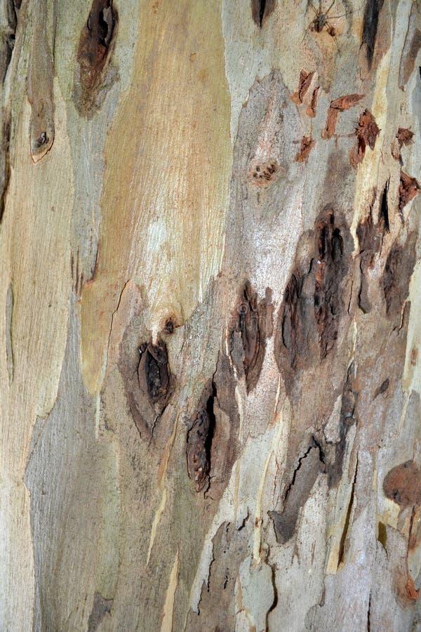 Textura de la piel del árbol imágenes de archivo libres de regalías