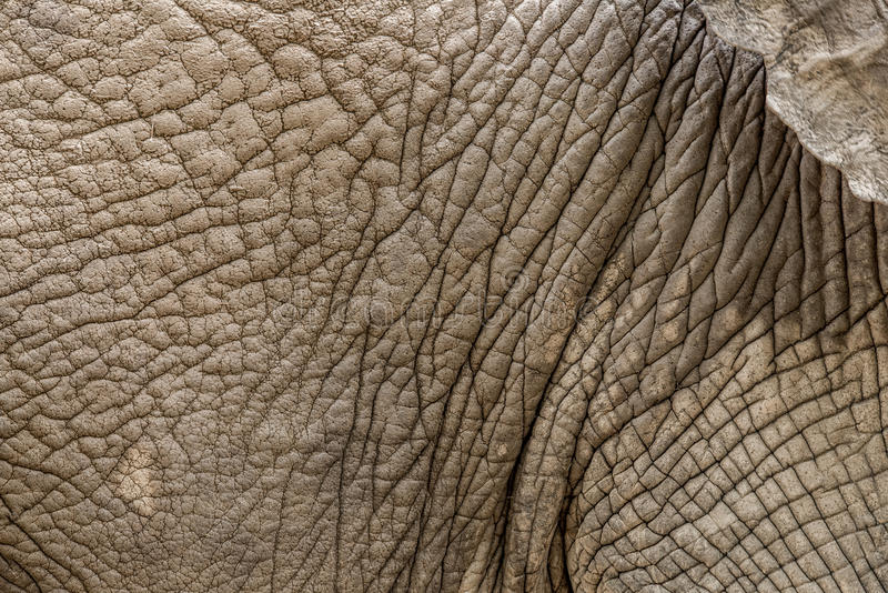 Textura de la piel del elefante del fondo imágenes de archivo libres de regalías