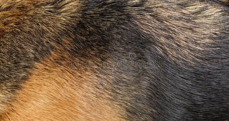 Textura de la piel del perro imagenes de archivo