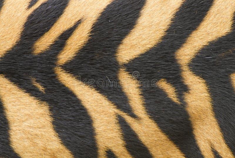 Textura de la piel verdadera del tigre (piel) imagen de archivo libre de regalías