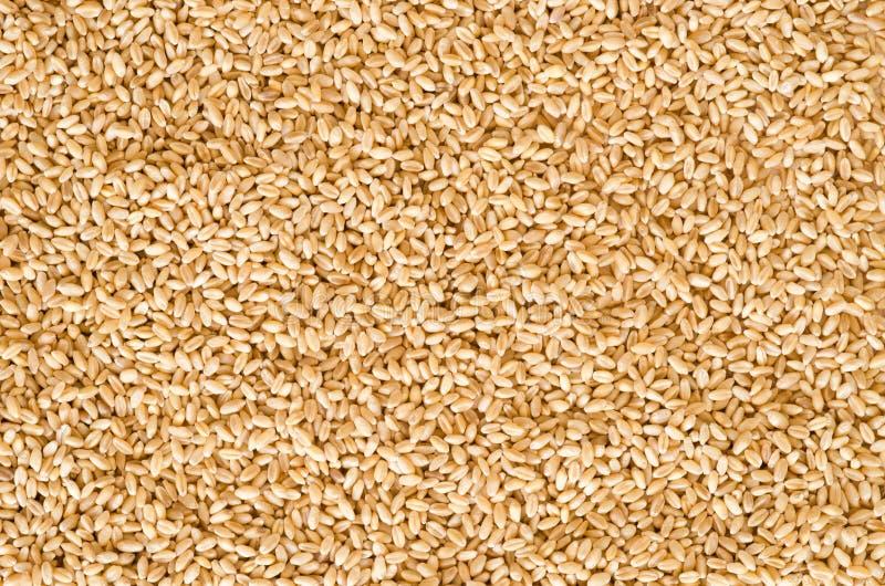 Textura de la semilla del trigo imágenes de archivo libres de regalías