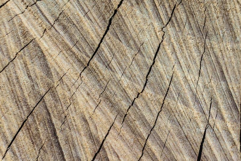 Textura de la superficie del corte de la madera seca agrietada fotografía de archivo libre de regalías