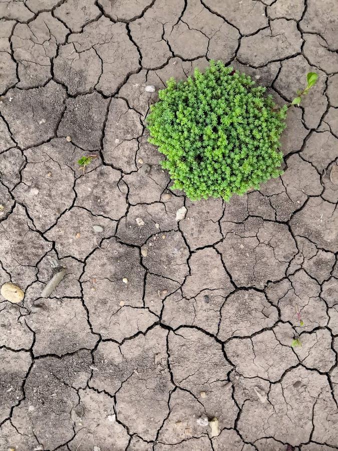 Textura de la tierra agrietada marrón seca Falta de humedad en el suelo, sequía El concepto de tierra de la deshidratación imagenes de archivo