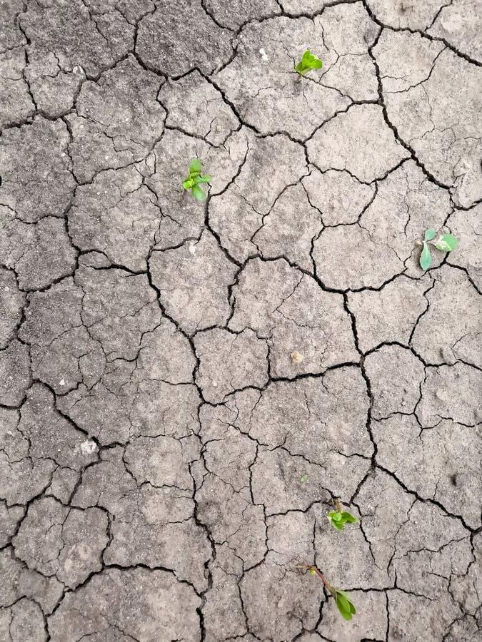 Textura de la tierra agrietada marrón seca Falta de humedad en el suelo, sequía El concepto de tierra de la deshidratación imágenes de archivo libres de regalías