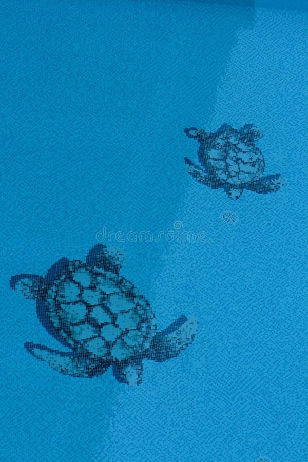 Textura de la tortuga en piscina imagenes de archivo