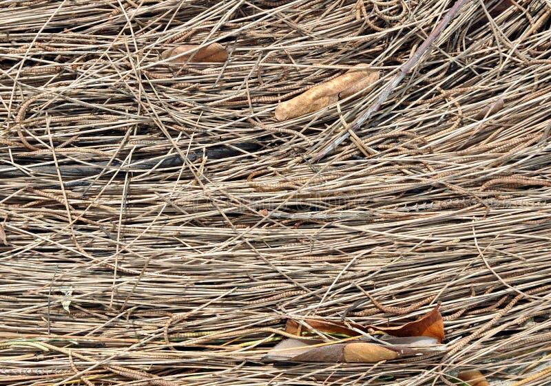 Textura de las agujas del pino y de las hojas secadas del abedul foto de archivo libre de regalías