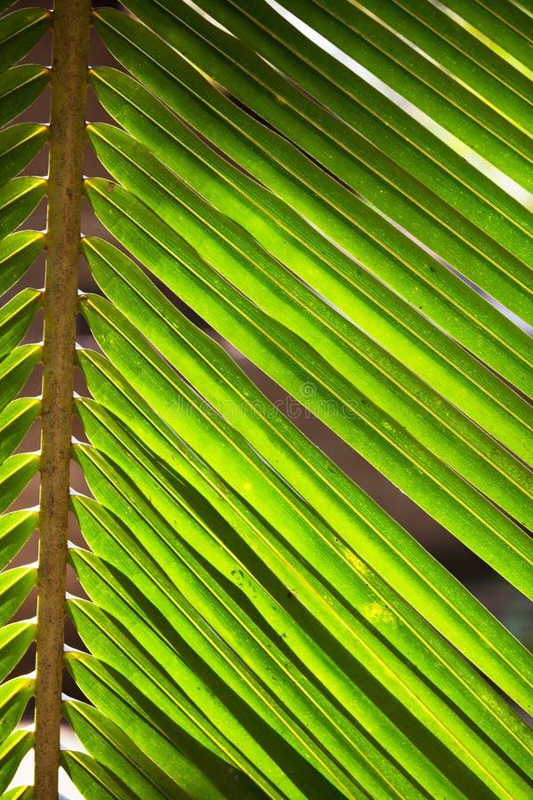 Textura de las hojas fotos de archivo