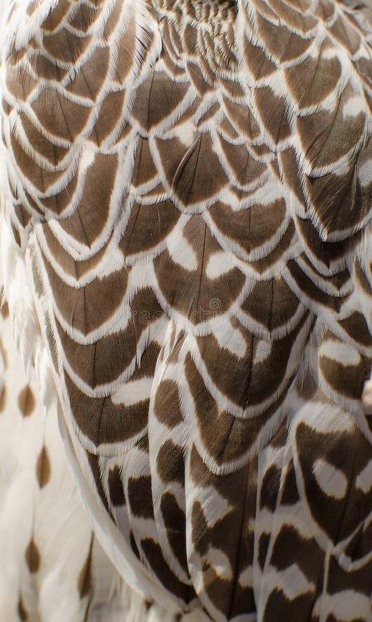 textura de las plumas blancas del negro del witn de la. Black Bedroom Furniture Sets. Home Design Ideas