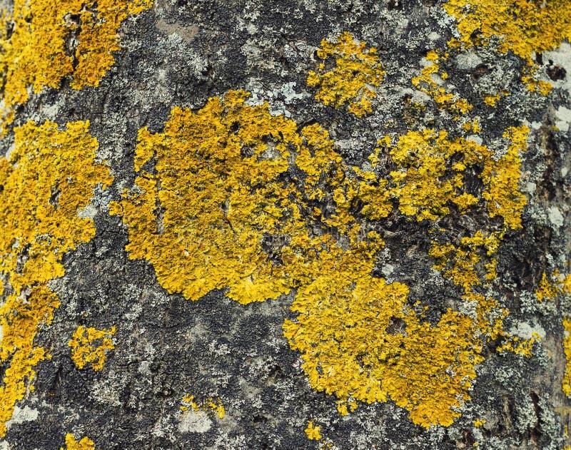 Textura de los hongos del árbol en círculos amarillos y azules fotografía de archivo libre de regalías