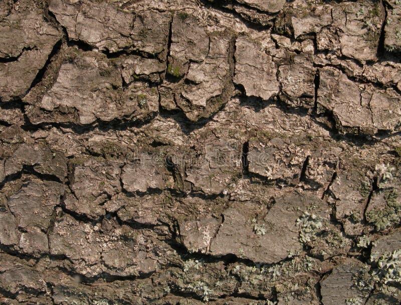Textura de madeira abstrata da casca fotografia de stock royalty free