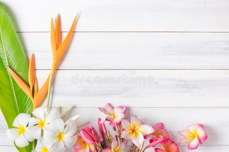 A textura de madeira branca com Heliconia e o plumeria florescem fotografia de stock