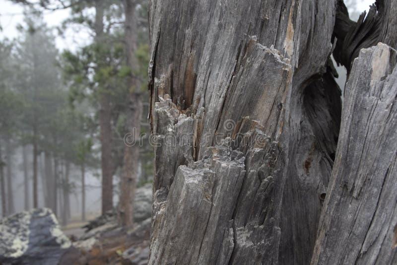 Textura de madeira com as árvores no fundo foto de stock royalty free