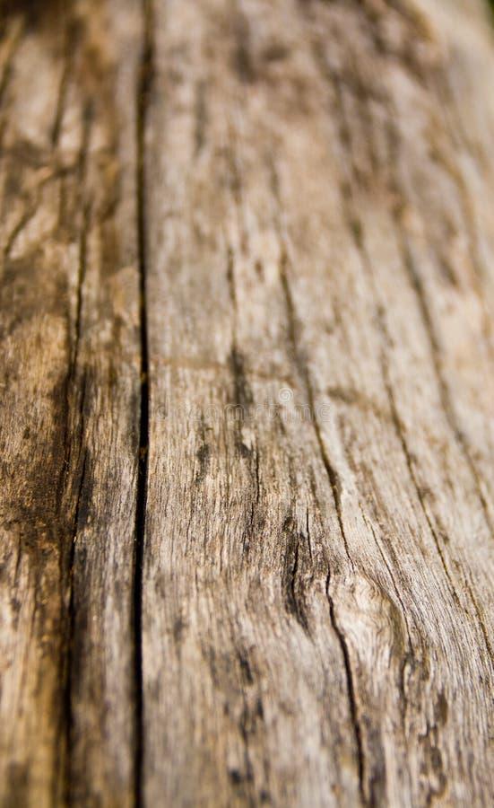 Textura de madeira com fundo natural do teste padrão fotografia de stock