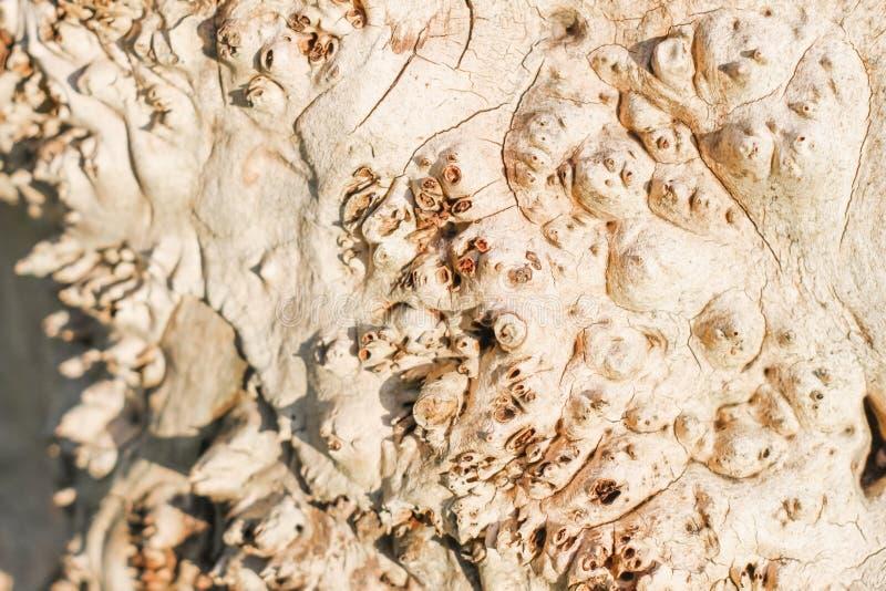 Textura de madeira com furos e saliências imagem de stock