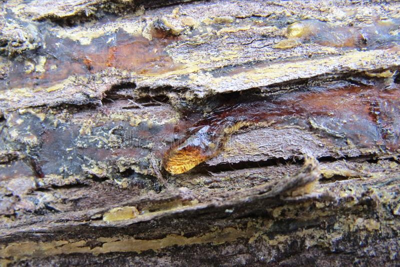 Textura de madeira com resina fotografia de stock royalty free