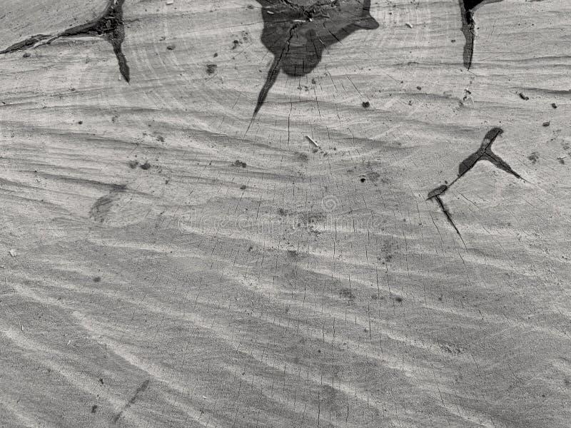 Textura de madeira como o fundo fresco, estilo do sótão imagens de stock