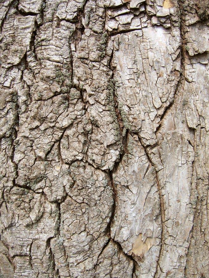 Textura de madeira da árvore de casca. imagem de stock