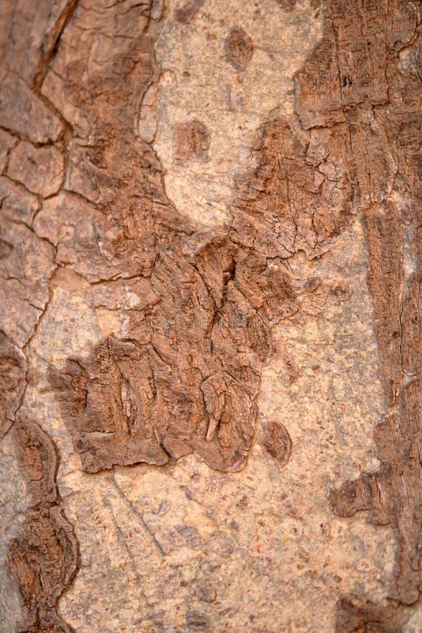 Textura de madeira da casca de árvore imagem de stock