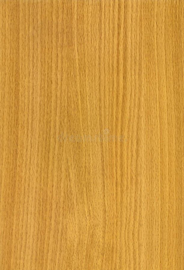 Textura de madeira da faia imagem de stock royalty free