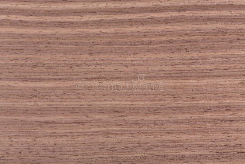 Textura de madeira da noz americana, backghound de madeira natural fotos de stock royalty free