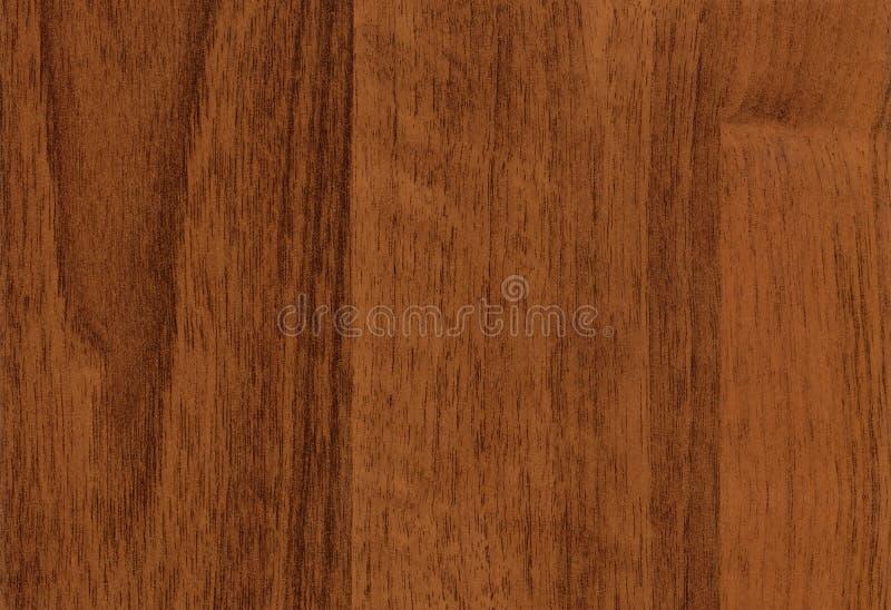 Textura de madeira da noz do Close-up fotografia de stock royalty free