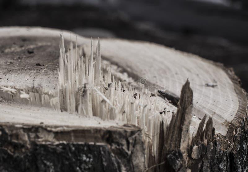 Textura de madeira A textura da ?rvore ? clara - marrom, visto, tira Fundo fotografia de stock royalty free
