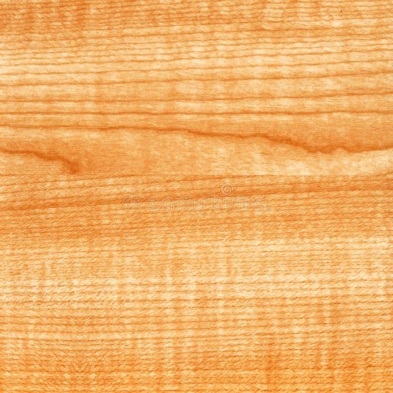 Textura de madeira de Thansau do bordo do Close-up fotografia de stock