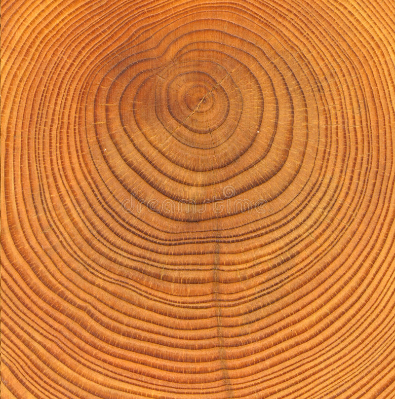 Textura de madeira do corte imagens de stock