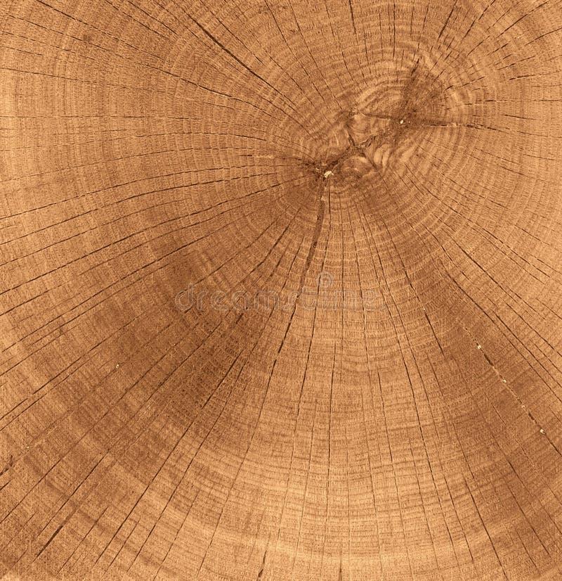 Textura de madeira do corte imagem de stock royalty free
