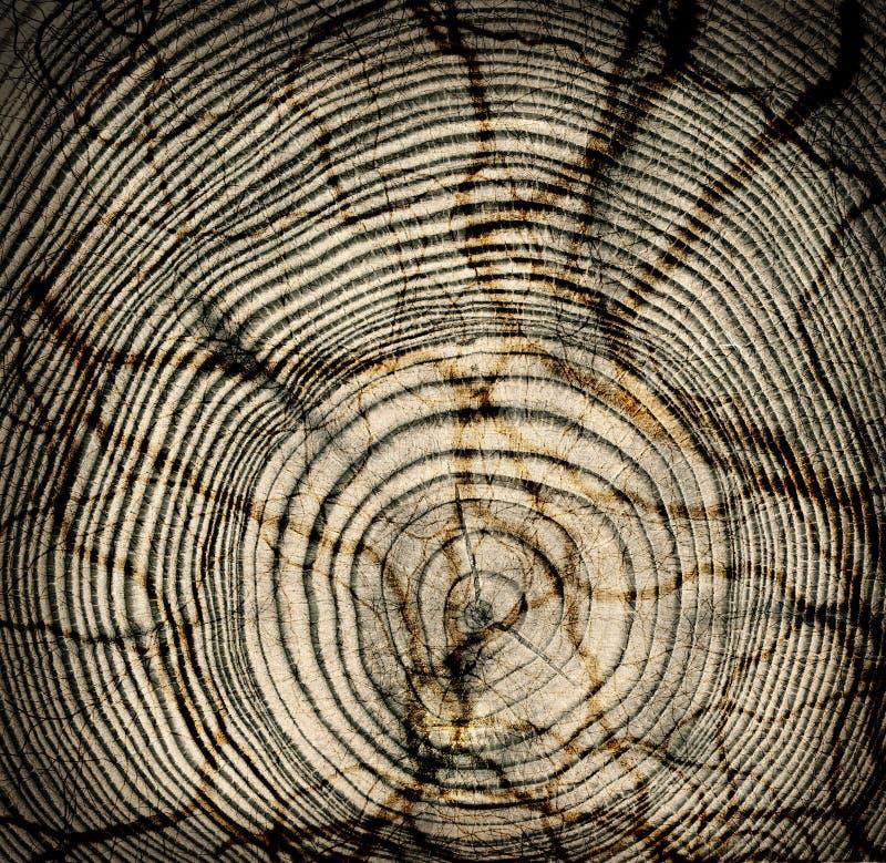 Textura de madeira do corte fotografia de stock royalty free