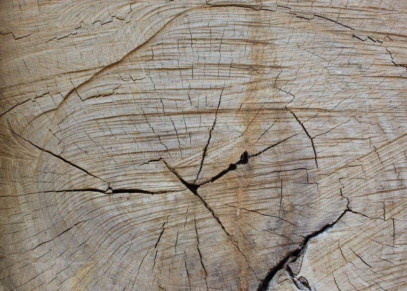Textura de madeira do corte do close up imagem de stock royalty free