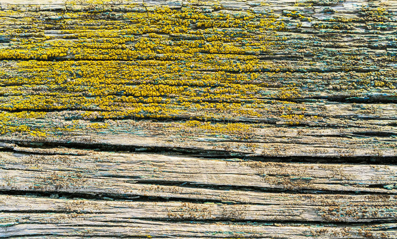 Textura de madeira do fundo do vintage connosco e furos de prego fotografia de stock royalty free