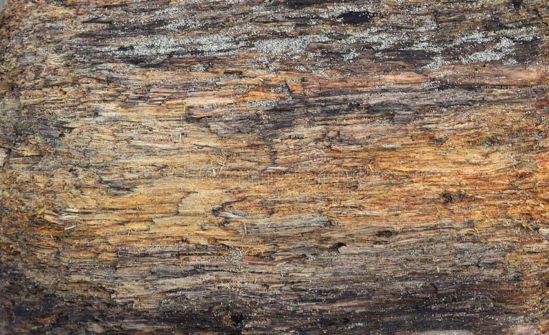 Textura de madeira do tambor grosso podre velho foto de stock royalty free