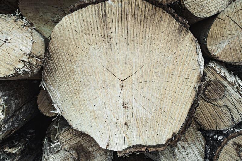 Textura de madeira do teste padrão ondulado do anel de uma fatia de árvore Coto de madeira aspen vidoeiro coniferous ilustração stock