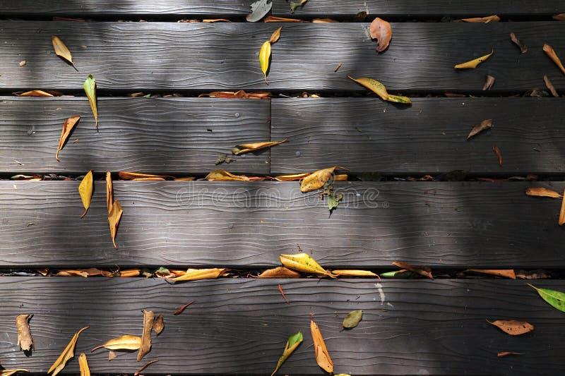 A textura de madeira do trajeto fotografia de stock royalty free