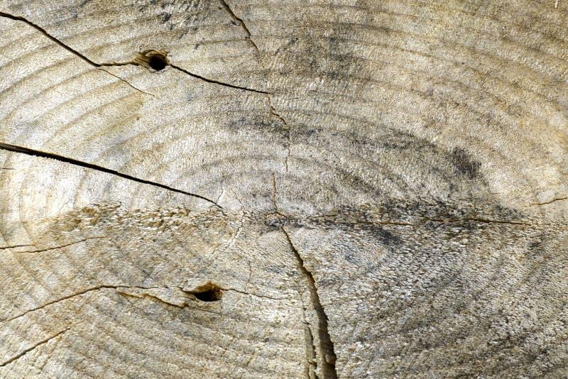 Textura de madeira do tronco de árvore cortado abstraia o fundo Textura de madeira do fundo do grunge velho imagem de stock