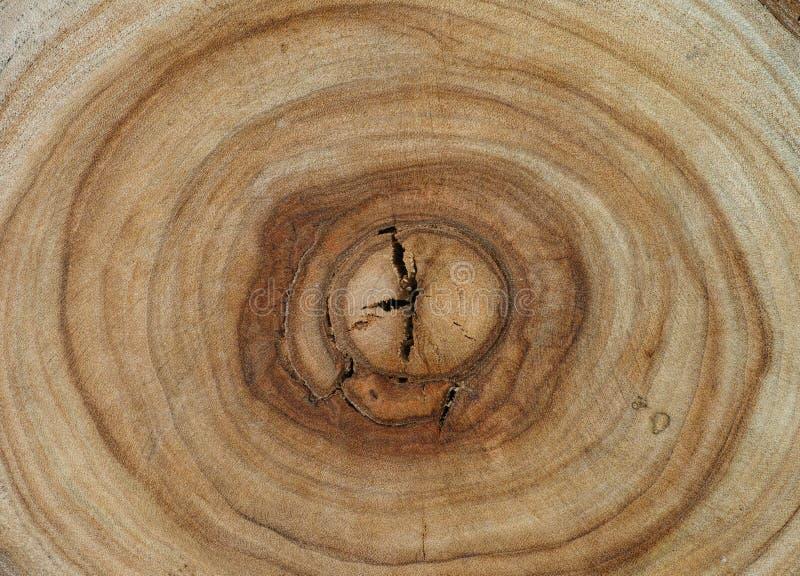 Textura de madeira dos anéis de árvore da cânfora imagem de stock