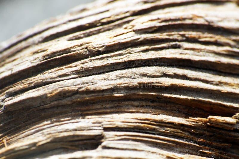 Textura de madeira, fundo macro da grão de madeira imagens de stock royalty free