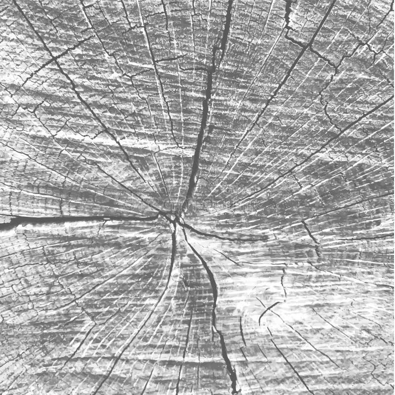 Textura de madeira Gray Old Wooden Background natural estoque ilustração royalty free