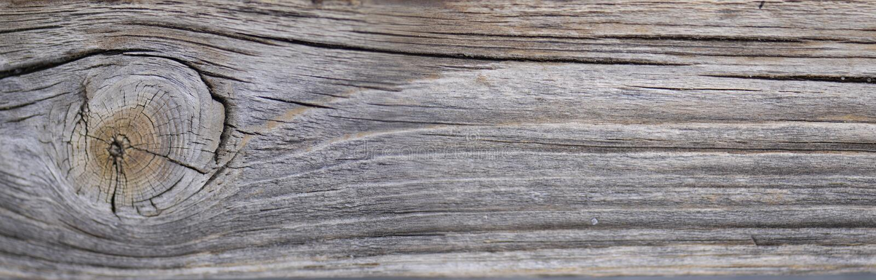 A textura de madeira natural com grão de madeira bonita pode usado como o fundo imagem de stock royalty free