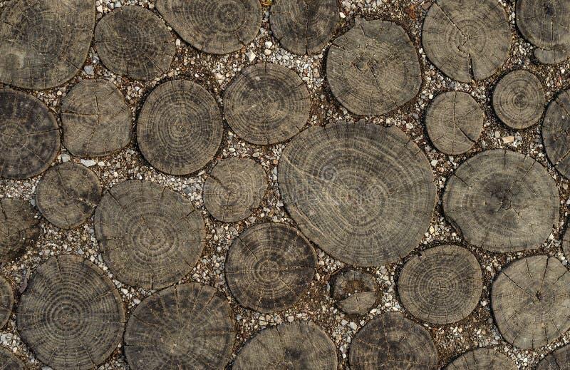 Textura de madeira no corte O trajeto é pavimentado com madeira imagem de stock royalty free