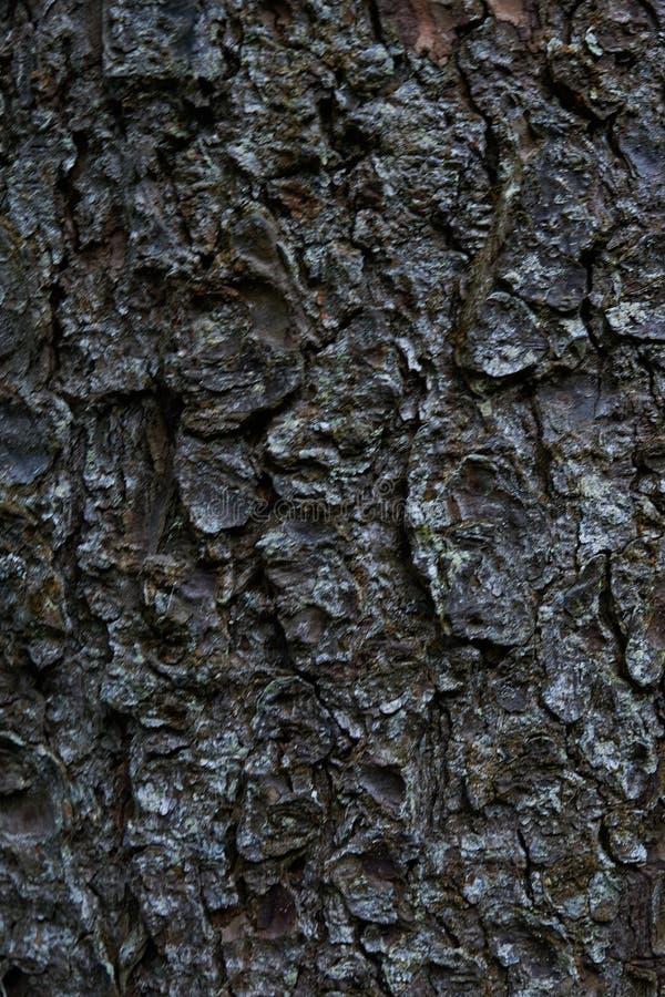 Textura de madeira painéis velhos do fundo imagem de stock royalty free