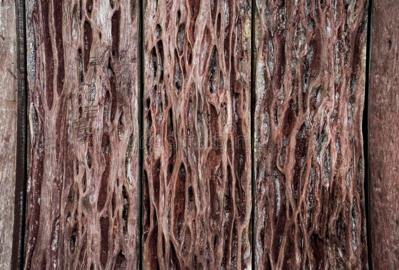 Textura de madeira painéis velhos do fundo imagens de stock royalty free