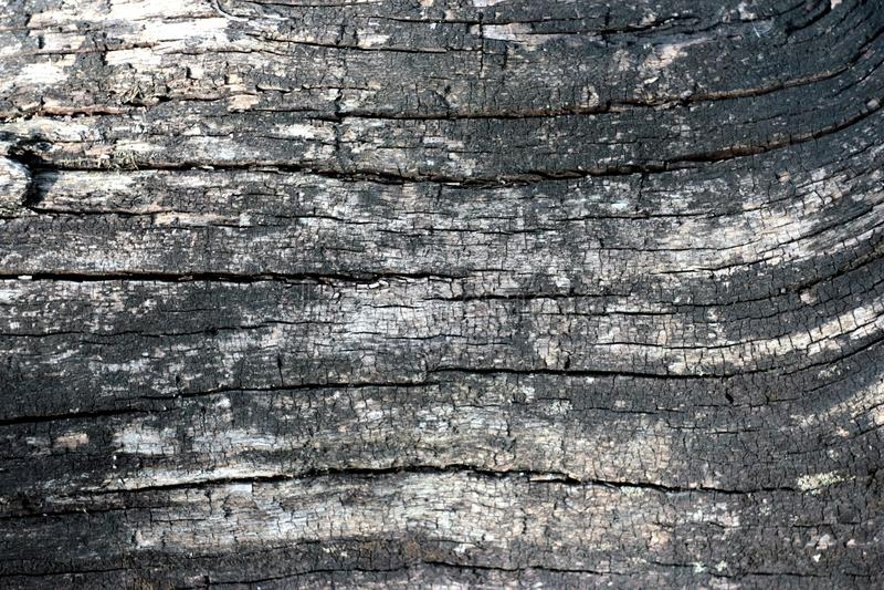 Textura de madeira queimada do bacground imagens de stock royalty free