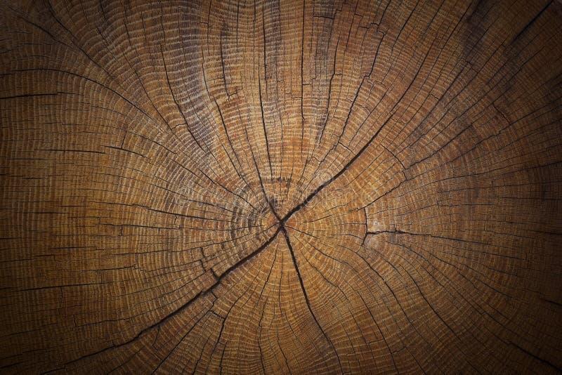 Textura de madeira de se??o transversal velha, rachada do fundo do tronco de ?rvore foto de stock