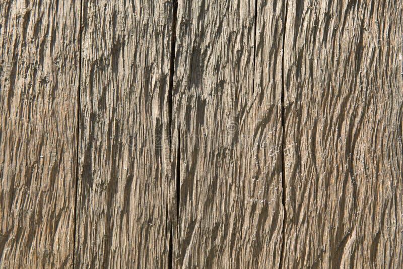Textura de madeira seca fotografia de stock royalty free