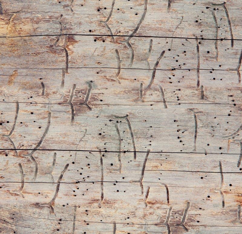 Textura de madeira sem emenda imagem de stock royalty free
